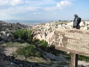 Pigeon Valley Galeri